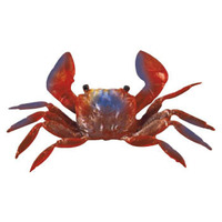 Dark Red Crab